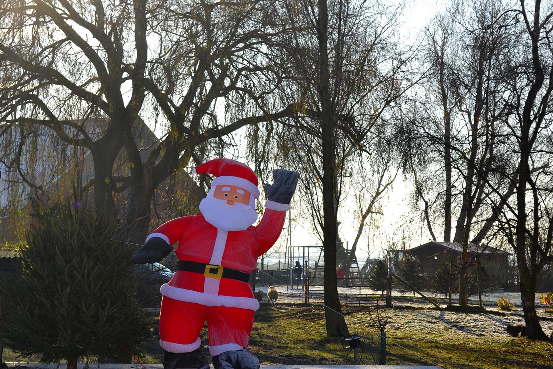 Nordmann Excellent kerstbomen Leimuiden